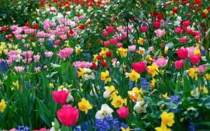 Flowers-Garden-HD-Wallpapers